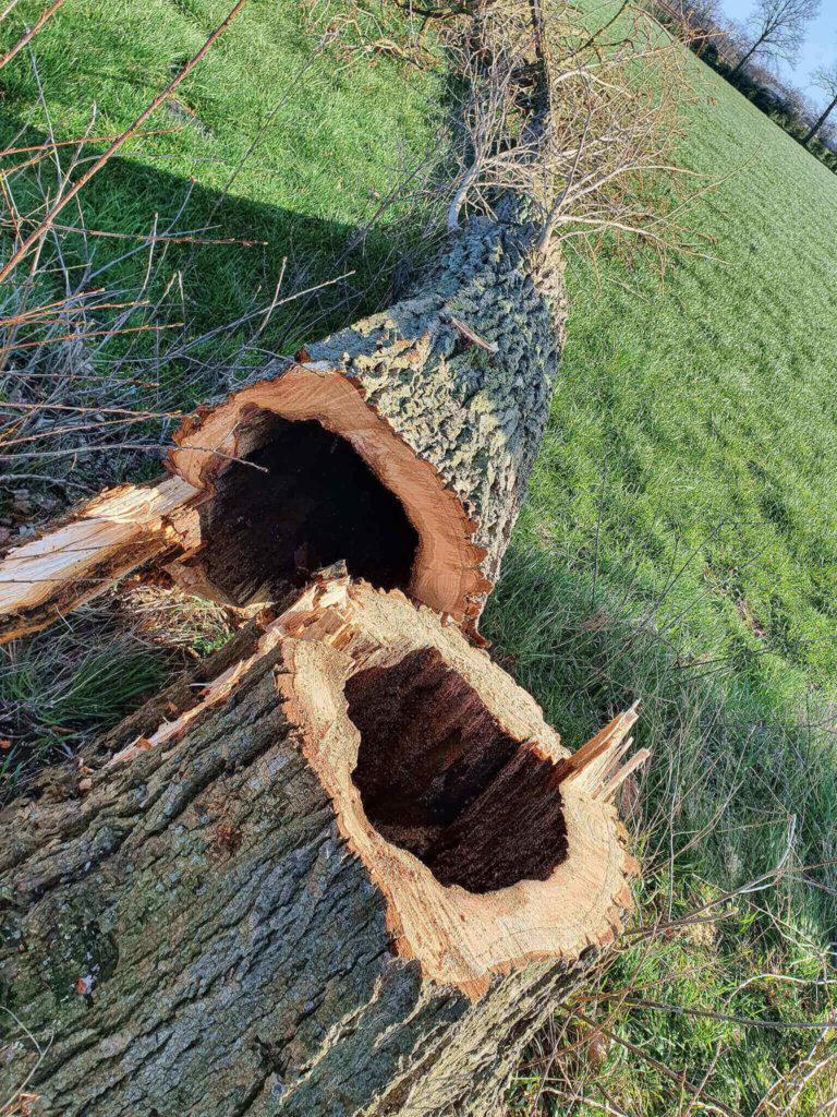 veiligheid bomen controleren vta